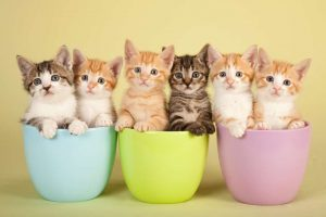 Social Media 64 Top Tips One2Create cats 300x200 - 64 Tips To Rock Your Social Media