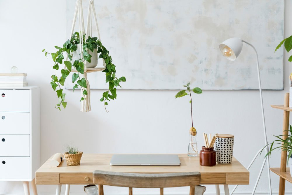 charlie surround yourself with plants 1000x667 1 - One2create Offers Tips and Benefits of Working from Home